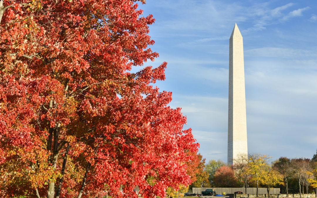 4 Amazing Fall Festivals in Washington, D.C.